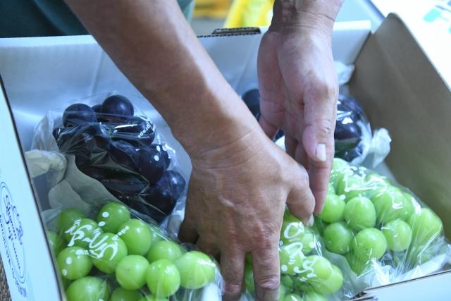 果物の集荷、仕分け作業員募集
